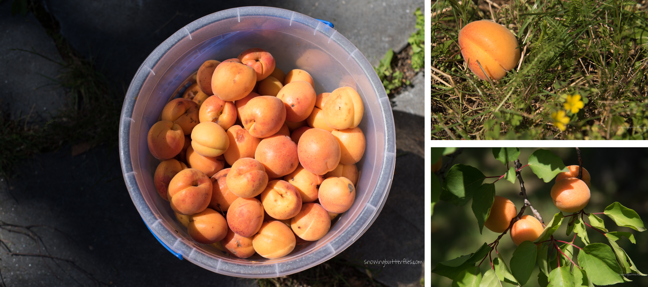 mariana perrone, austria, snowing butterflies, apricot, marmelade, still life