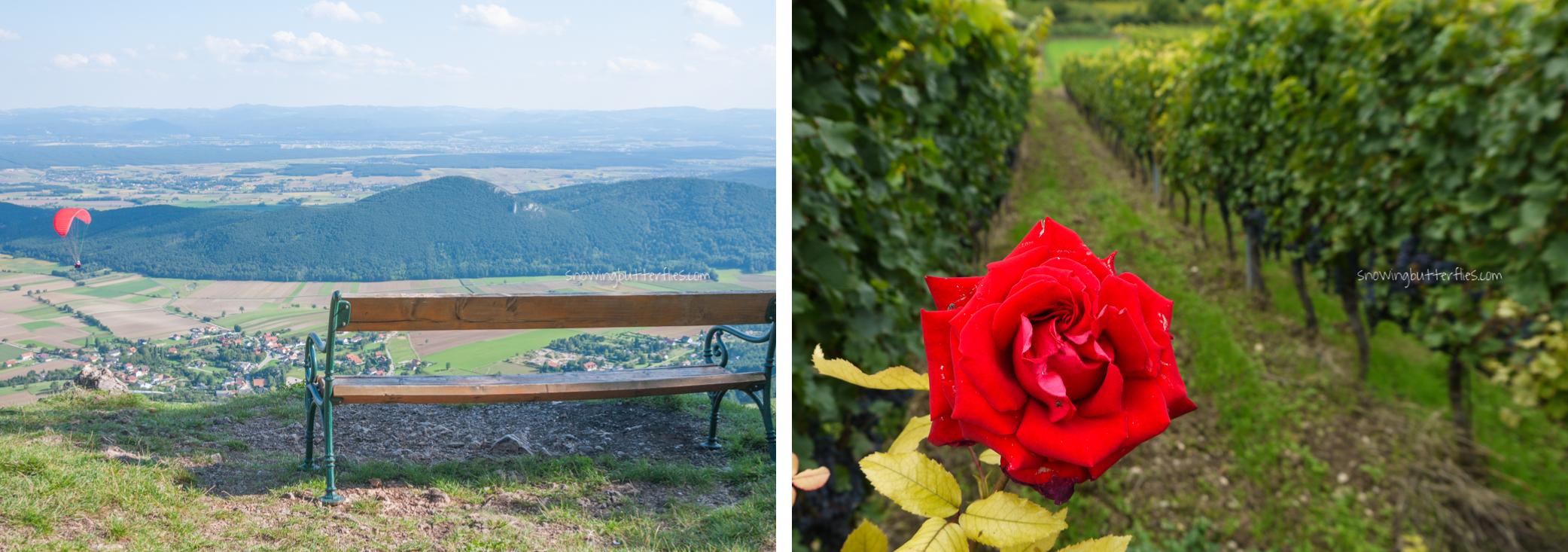 mariana perrone, austria, snowing butterflies, still life, landscape, seasons, rose, hohewand