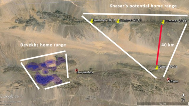 a map of South Gobi's snow leopard habitat. The yellow pins show locations in Nemegt (north) and Noyon (south) where Khasar was photographed. The purple area marks the home range of Devekh, another male snow leopard in the area.