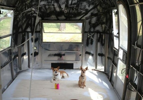 dogstream-571×400