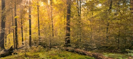 forest-copy-2-460×205