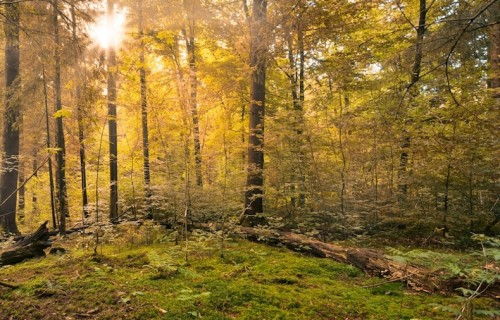 forest-copy-2-500×320