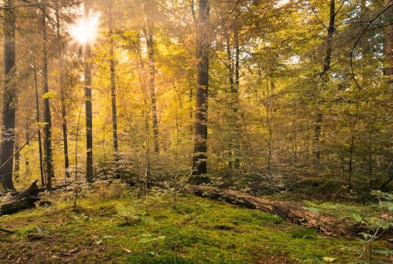 forest-copy-2-551×370