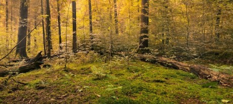 forest-copy-3-460×205