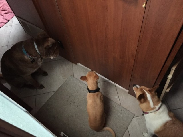 Dogs staring at door