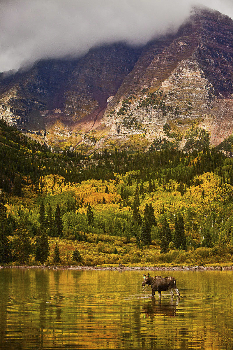 moose at maroon bells by jeremy swanson