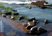 Seal Community