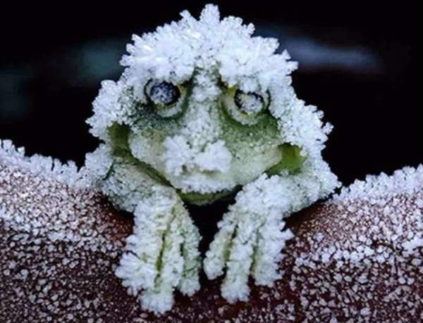 Frog snow report