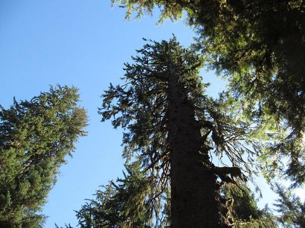 Hoh_Rainforest_-_Olympic_National_Park_-_Washington_State_(9779944142)