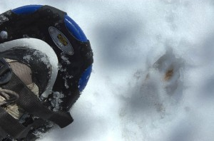 snowshoe and track