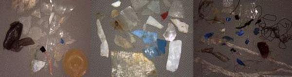 Microplastiche rinvenute nei campioni nelle diverse forme, dimensioni e materiali