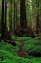 The woods around Monde