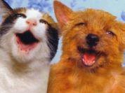 Happy-Pets