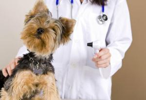 dog-at-veterinarian