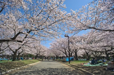 代々木公園 お花見