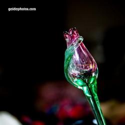 Tulpe, Glas