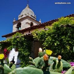 Kirche, Mission, Architektur, Gebäude, Kaktus, Sukkulente, Blüte, Kalifornien, USA