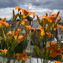 neues-aus-balkonien-www-gaidaphotos-com-gaidaphotos-3