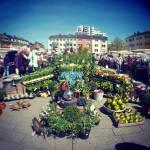 Antikmarkt Maternusplatz Rodenkirchen