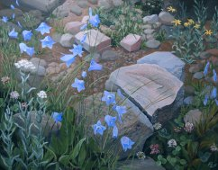 Colorado Harebells
