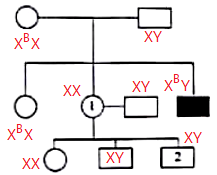 Pembahasan soal pola hereditas silsilah keluarga