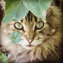 brady ernst cat