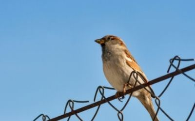 Are you hosting sparrows or pigeons?