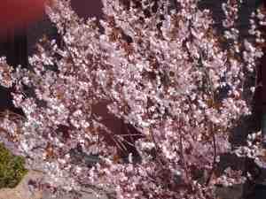 lente 2013 april 20 003