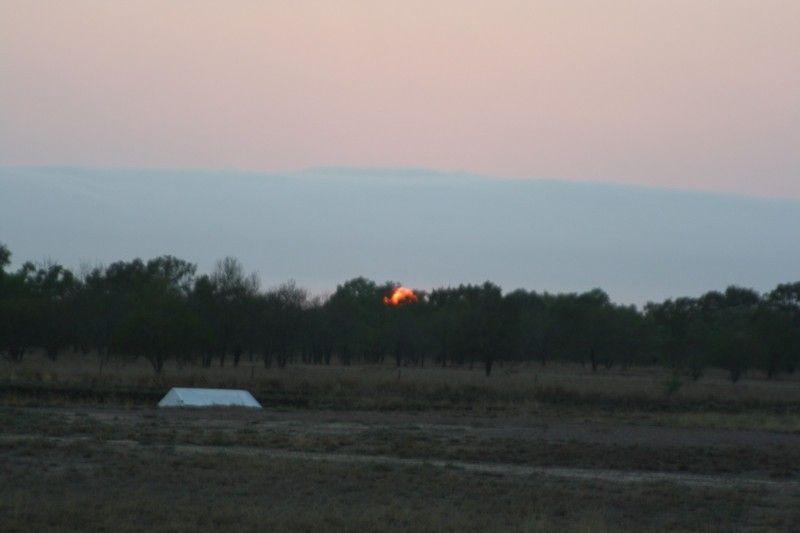 photo 2 - Morning Glory