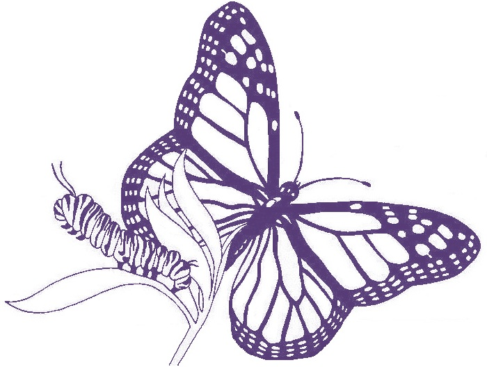Transformation Academy Caterpillar to Butterfly