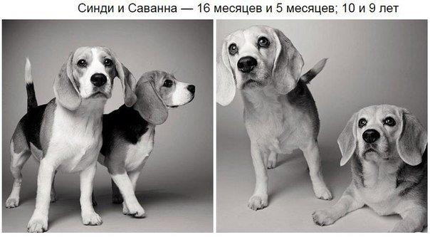 大人の犬の写真