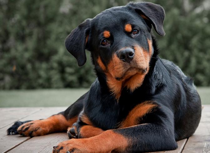 Собачья преданность быль или небыль