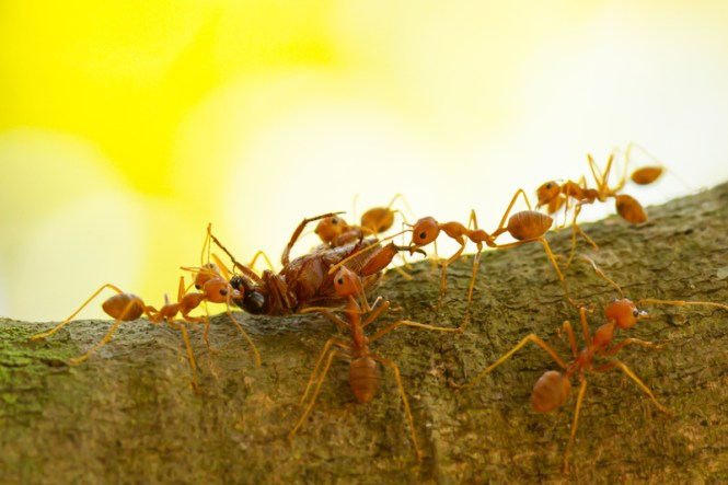 How To Get Rid Of Ant Hills Top 10 Best Ways Destroy An Hill Pest Hacks