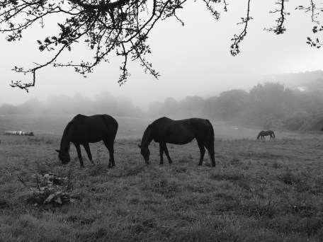 Horses in the mist. Copyright Fiona Michie.