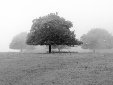 Misty trees. Copyright Fiona Michie.