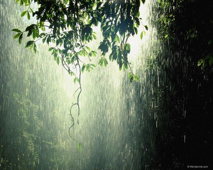 тропический ливень