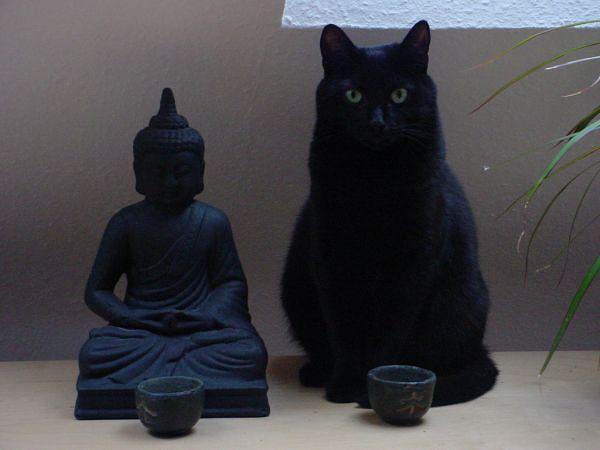 кошки мастера дзен