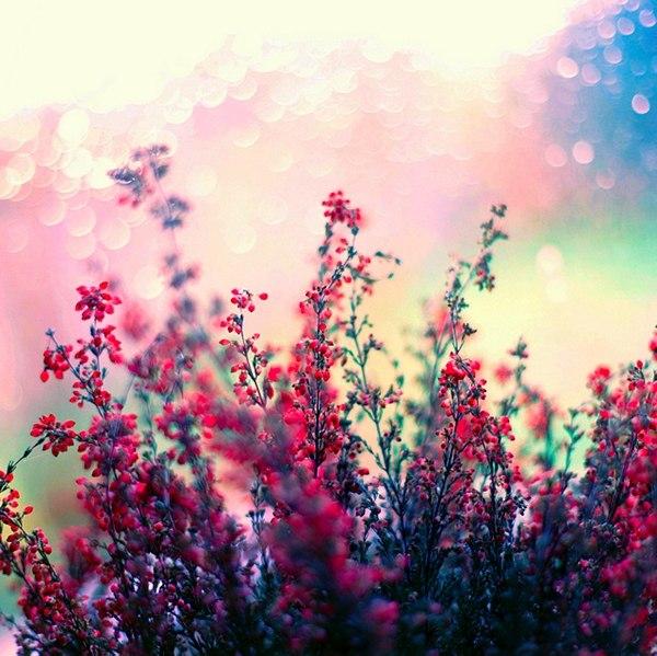 цветы волшебство