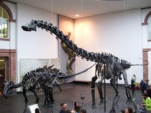 Museo Senckenberg, fósiles y dinosaurios en Frankfurt