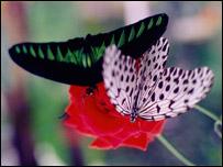 Dos mariposas en una flor