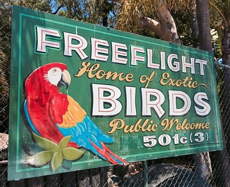 Admission to Free Flight Bird Sanctuary in Del Mar is $5 for adults and $2 for children.   Free Flight Bird Sanctuary also offers field trips for homeschoolers, school groups, summer camps and scout troops year around.  They cost $7 per person.