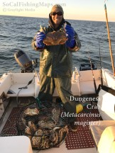 A lucky fisherman displaying a full pot of dungeness crab.