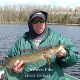 Angler holding a northen pike while wearing a UCSB hat. Go Gauchos!
