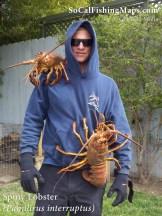 Point Loma yard bugs.