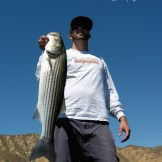 Angler holding a striped bass from Castaic Lake in Southern California.