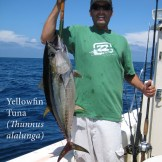A yellowfin tuna captured at the 9-Mile Bank, offshore San Diego, California.