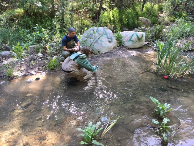 Sediment sampling in Sta Paula Creek 2016
