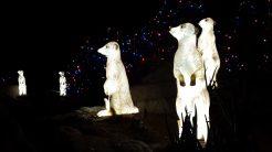 Alert Prairie Dogs