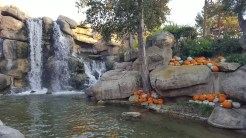 Plentiful pumpkins at the Relax Zone by Mystery Lodge