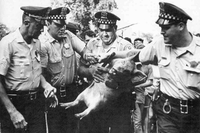 During the Democratic Party Convention in Chicago, at the Civic Center plaza (now known as the Daley Center), Yippie leaders Jerry Rubin, Abbie Hoffman and others nominated their presidential contender – Pigasus the pig. His platform was 'garbage'. Seven Yippies – and Pigasus – were arrested.